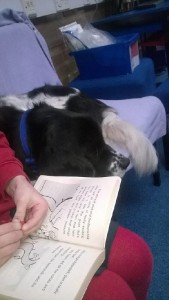 Read to dogs - Murphy enjoying a story