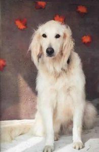 Barney Canine Concern dog