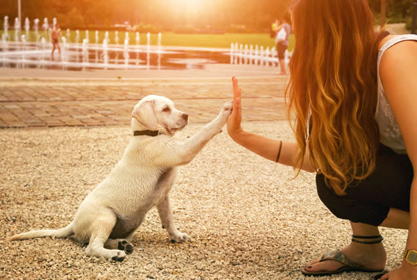 High Five for Canine Concern